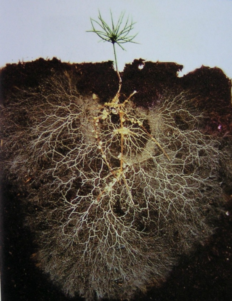 Mycorrhizal science mycorrhizae and beneficial microbes for Soil for plants