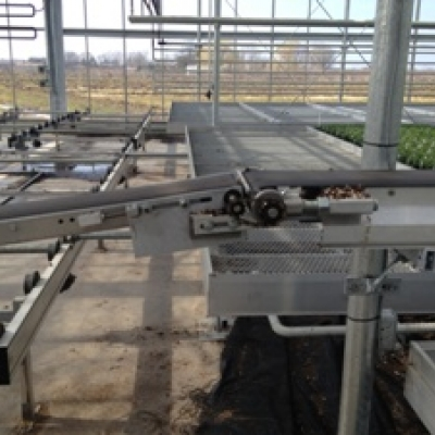 Permanent Conveyor - TAVA Systems - Greenhouse Automation