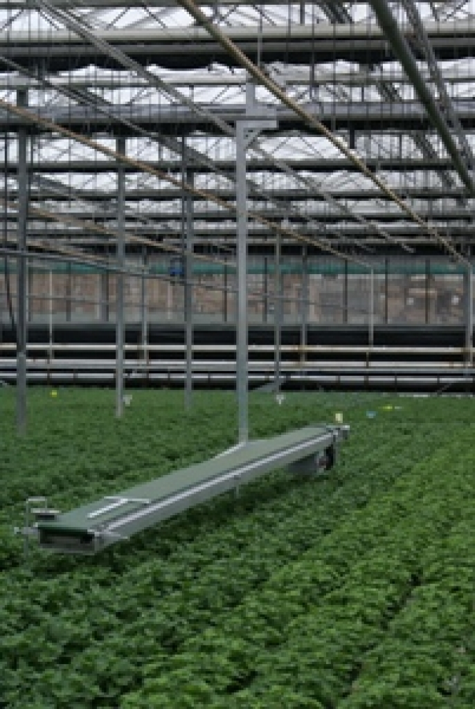 Portable Belt Conveyor | TAVA Systems | Greenhouse Automation
