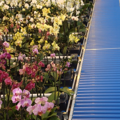 Delivery bsystem for Orchids