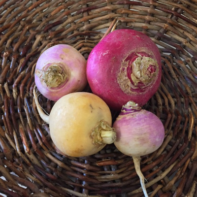 1lb Mixed Turnip