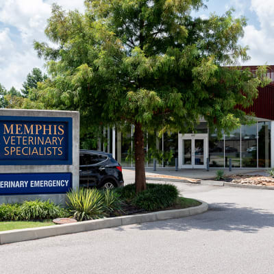 Memphis Veterinary Specialists & Emergency