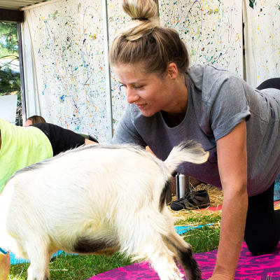 Fox Den Goat Yoga