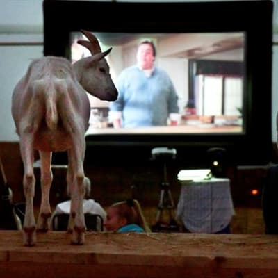 Movies with Goats - Uncle Buck