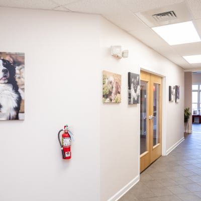 LakeCross Veterinary Hospital