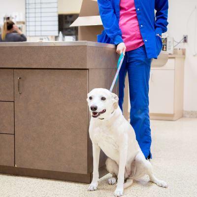 Carolina Veterinary Specialists in Matthews