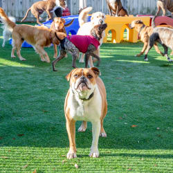 Doggy Daycare at Thomasville Veterinary Hospital