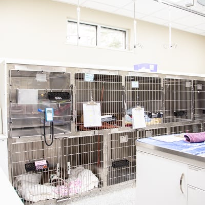 Hospital images of Carolina Veterinary Specialists in Rock Hill